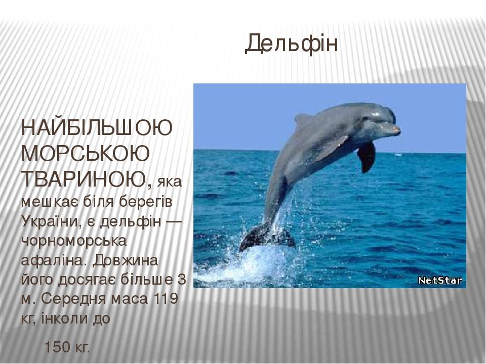 Дельфін НАЙБІЛЬШОЮ МОРСЬКОЮ ТВАРИНОЮ, яка мешкає біля берегів України, є дельфін — чорноморська афаліна. Довжина його досягає більше 3 м. Середня м...