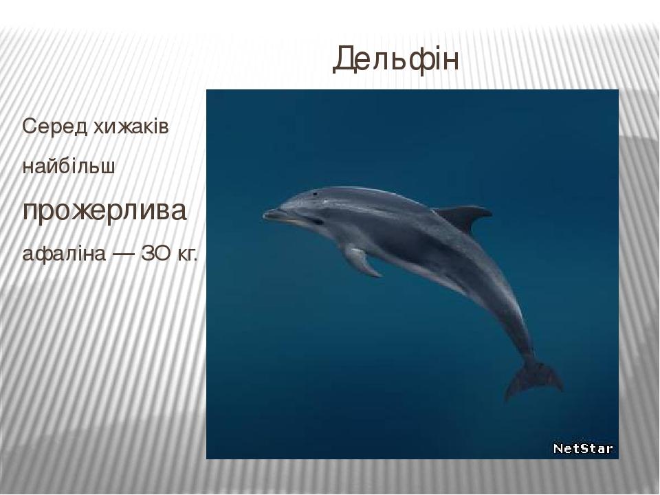 Дельфін Серед хижаків найбільш прожерлива афаліна — ЗО кг.