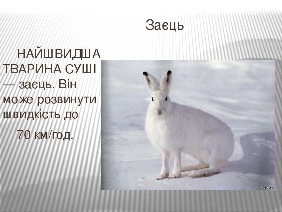 Заєць НАЙШВИДША ТВАРИНА СУШІ — заєць. Він може розвинути швидкість до 70 км/год.