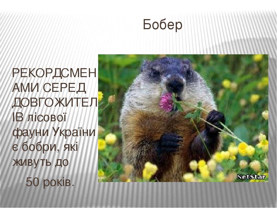 Бобер РЕКОРДСМЕНАМИ СЕРЕД ДОВГОЖИТЕЛІВ лісової фауни України є бобри, які живуть до 50 років.