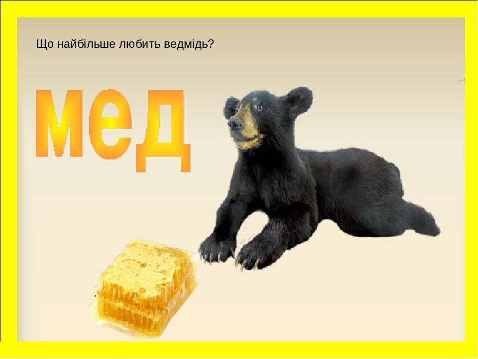 Що найбільше любить ведмідь?