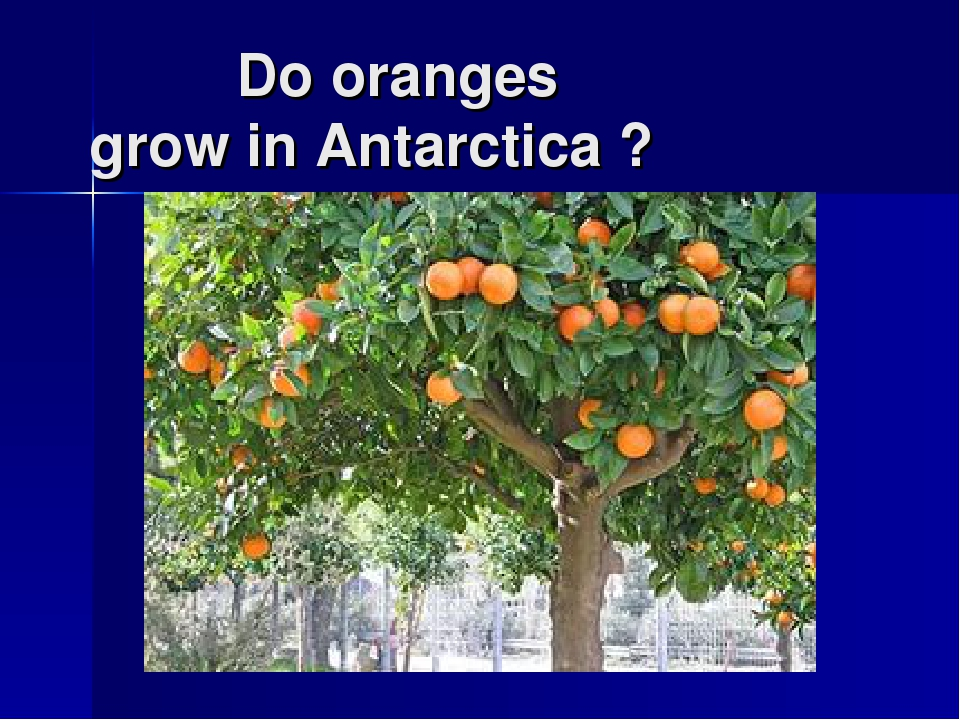 Do oranges grow in Antarctica ?
