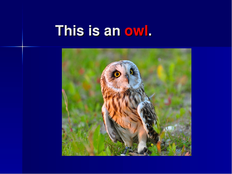 This is an owl.