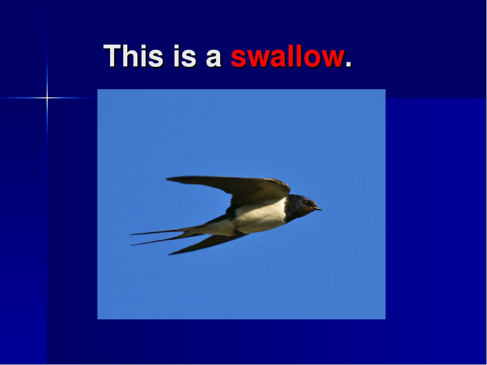 This is a swallow.