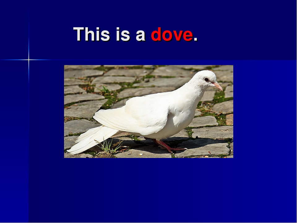 This is a dove.