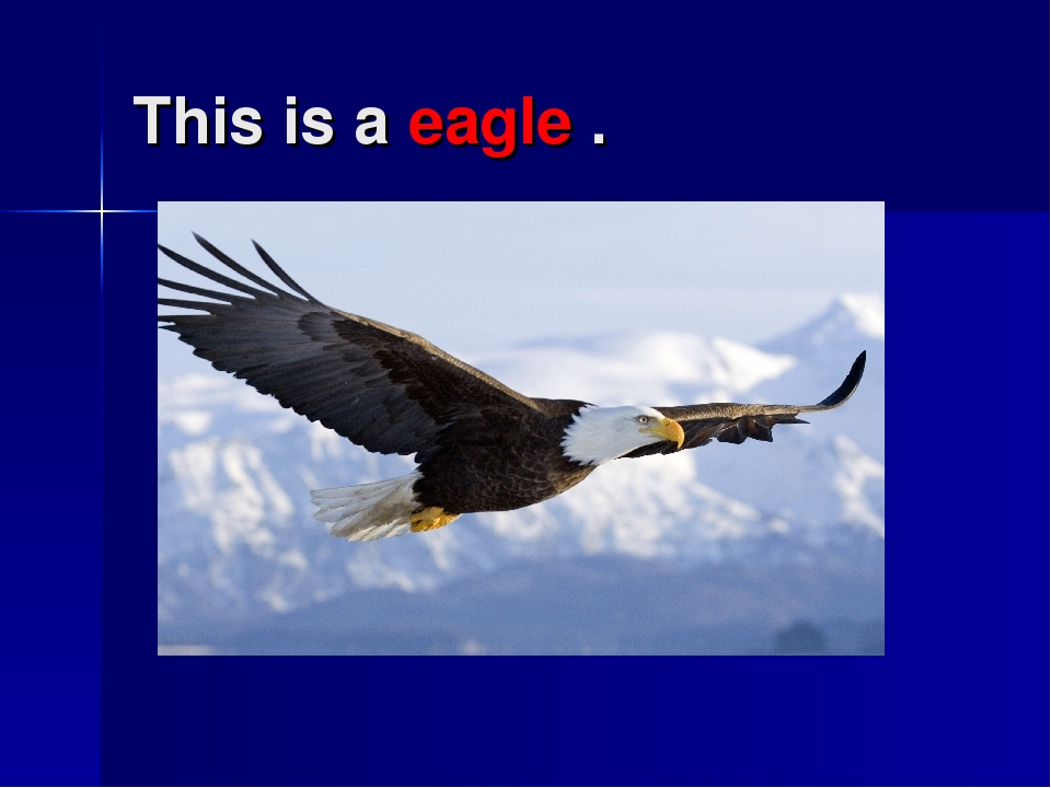 This is a eagle .