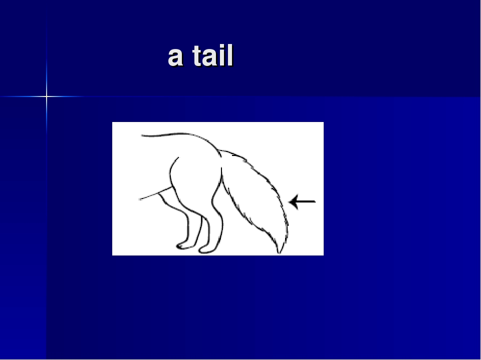 a tail