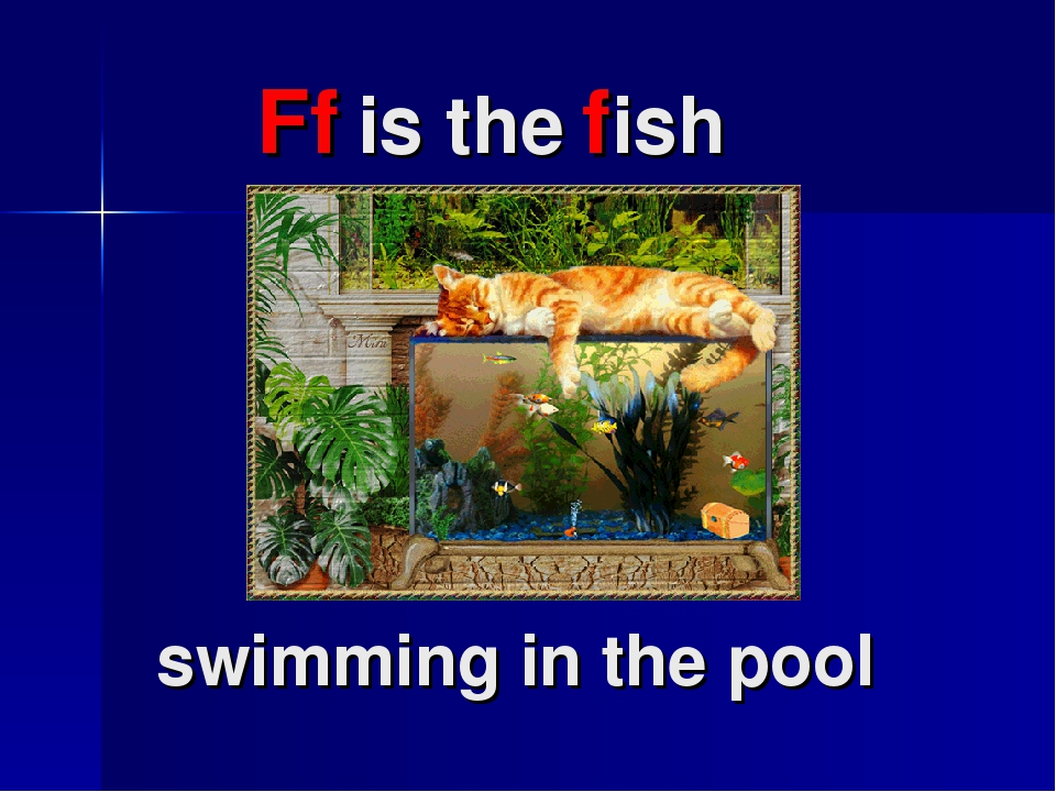 Ff is the fish swimming in the pool
