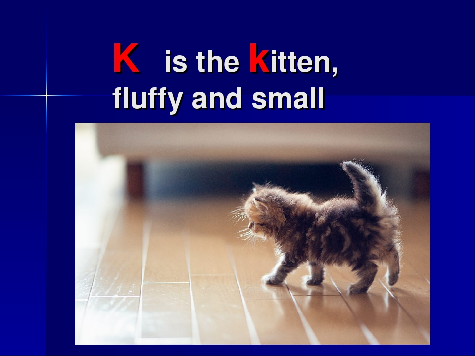K is the kitten, fluffy and small