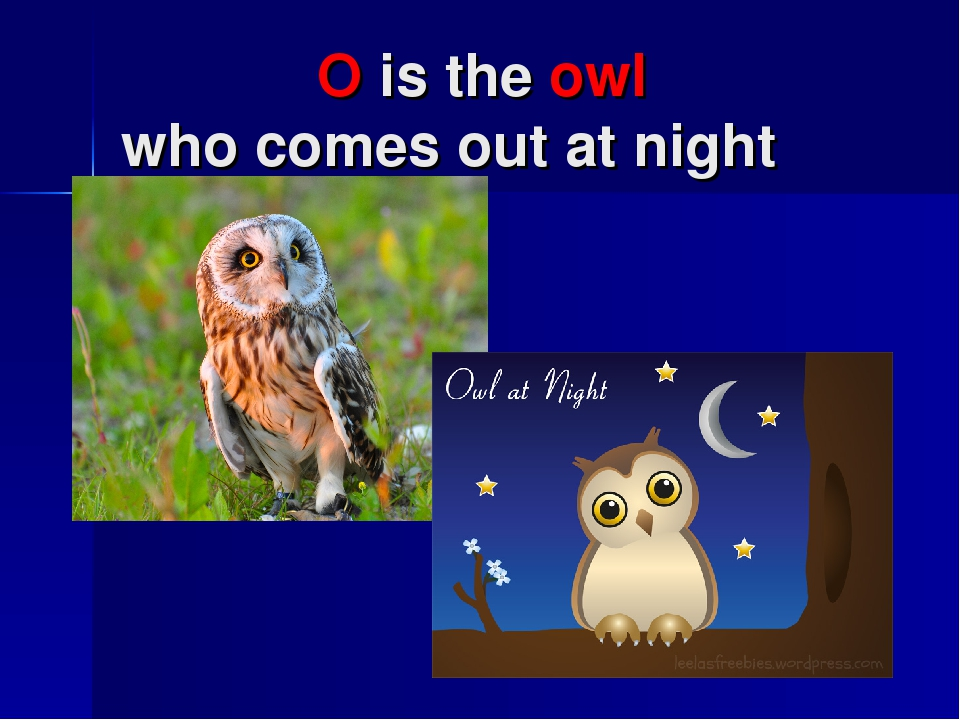 O is the owl who comes out at night