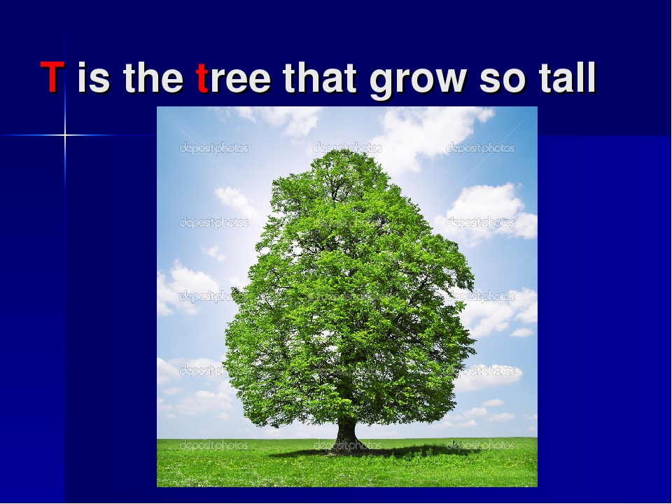 T is the tree that grow so tall