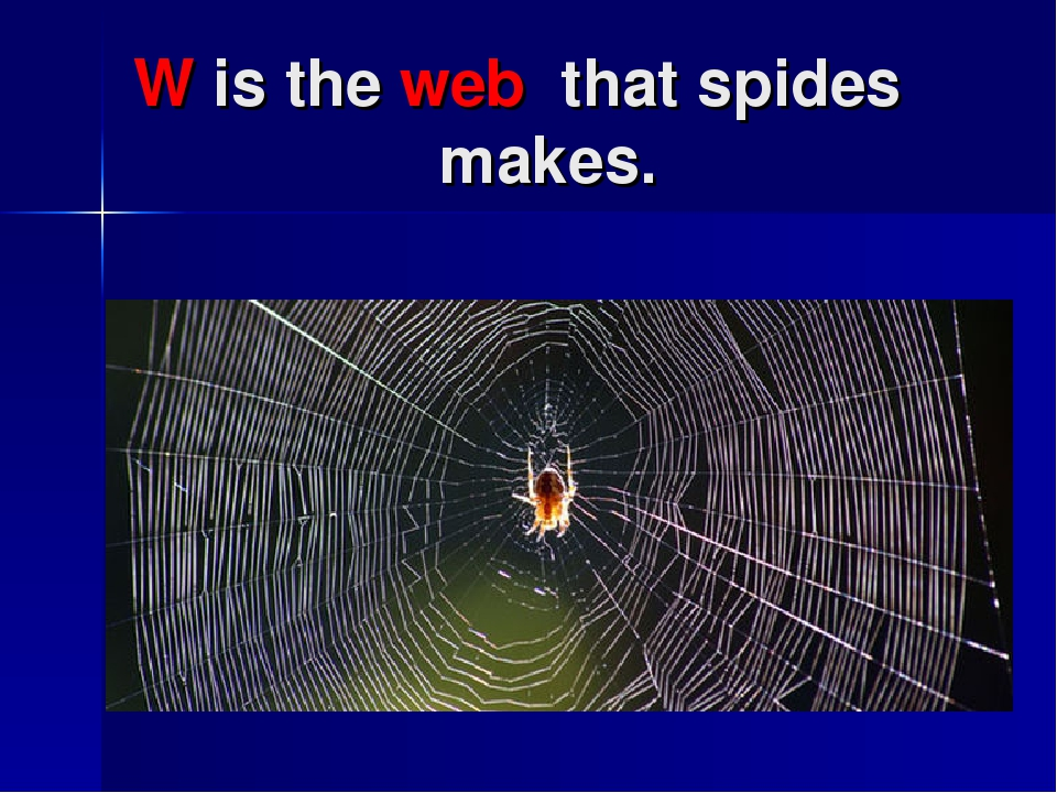W is the web that spides makes.