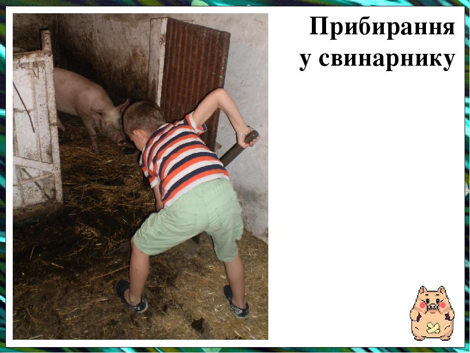 Прибирання у свинарнику