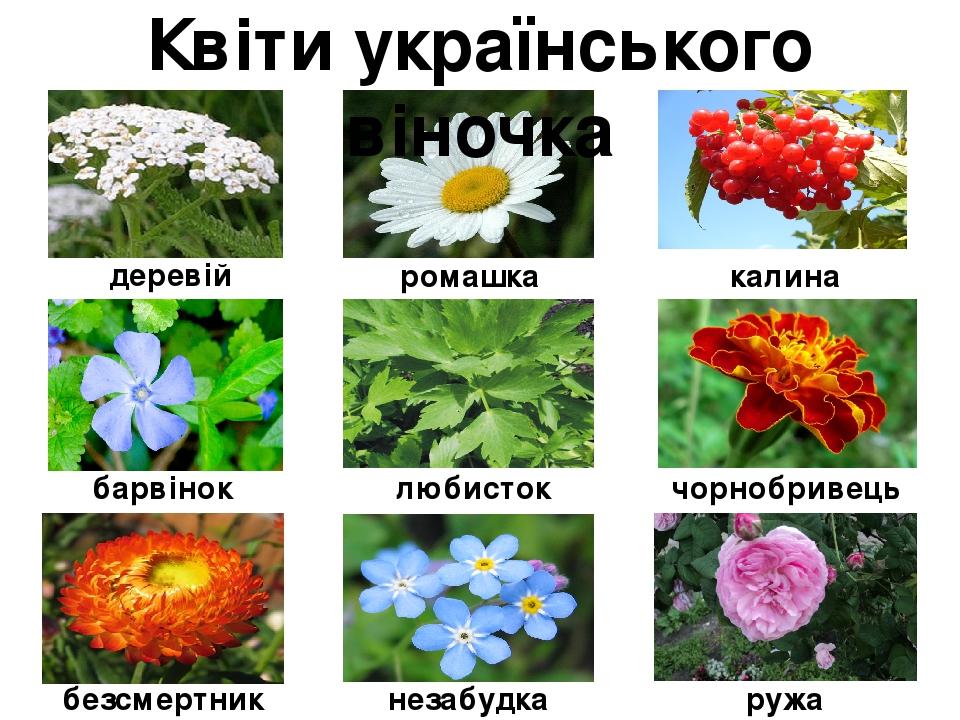 деревій ружа незабудка безсмертник чорнобривець любисток барвінок калина ромашка Квіти українського віночка