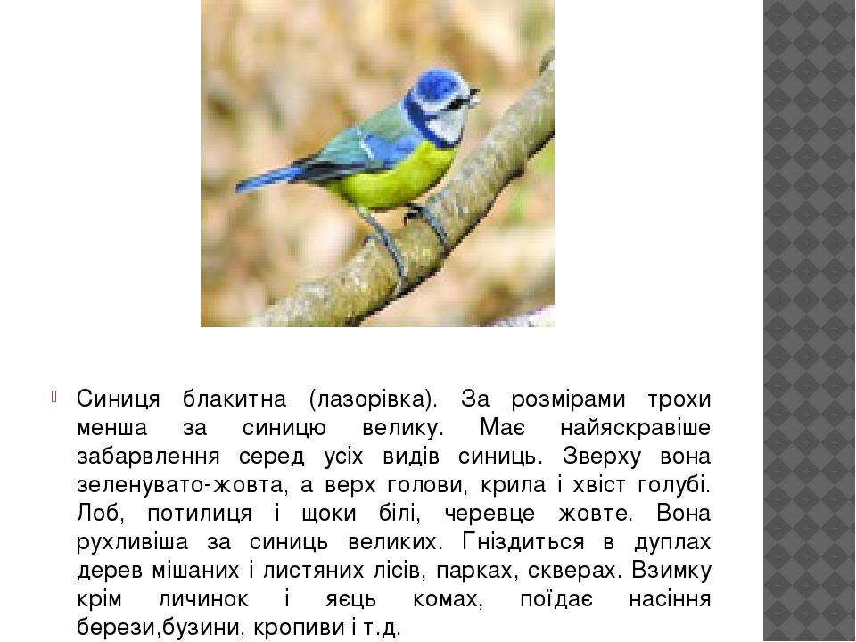 Синиця блакитна (лазорівка). За розмірами трохи менша за синицю велику. Має найяскравіше забарвлення серед усіх видів синиць. Зверху вона зеленуват...