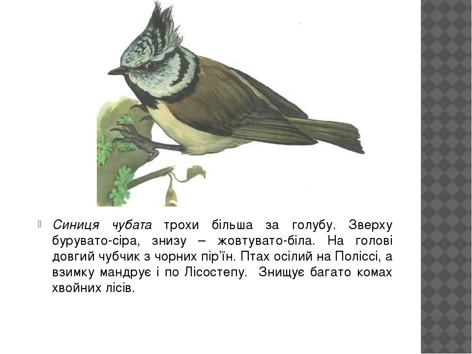 Cиниця чубата трохи більша за голубу. Зверху бурувато-сіра, знизу – жовтувато-біла. На голові довгий чубчик з чорних пір'їн. Птах осілий на Поліссі...