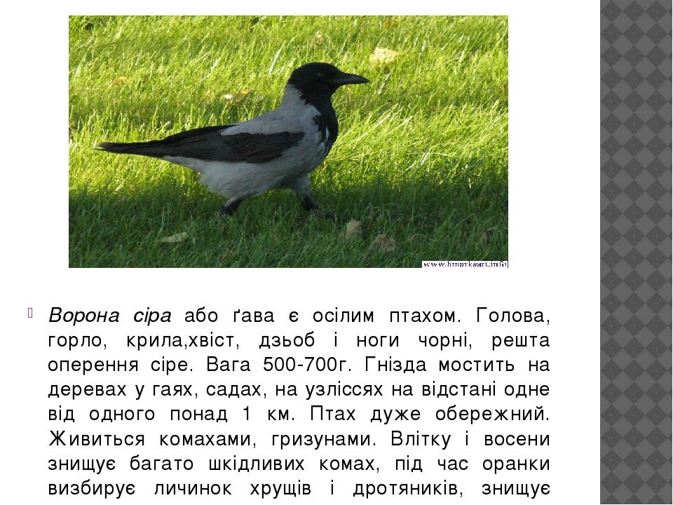 Ворона сіра або ґава є осілим птахом. Голова, горло, крила,хвіст, дзьоб і ноги чорні, решта оперення сіре. Вага 500-700г. Гнізда мостить на деревах...