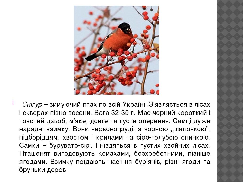 Снігур – зимуючий птах по всій Україні. З'являється в лісах і скверах пізно восени. Вага 32-35 г. Має чорний короткий і товстий дзьоб, м'яке, довге...