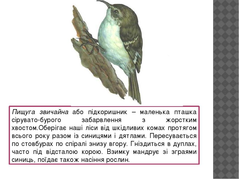 Пищуга звичайна або підкоришник – маленька пташка сірувато-бурого забарвлення з жорстким хвостом.Оберігає наші ліси від шкідливих комах протягом вс...