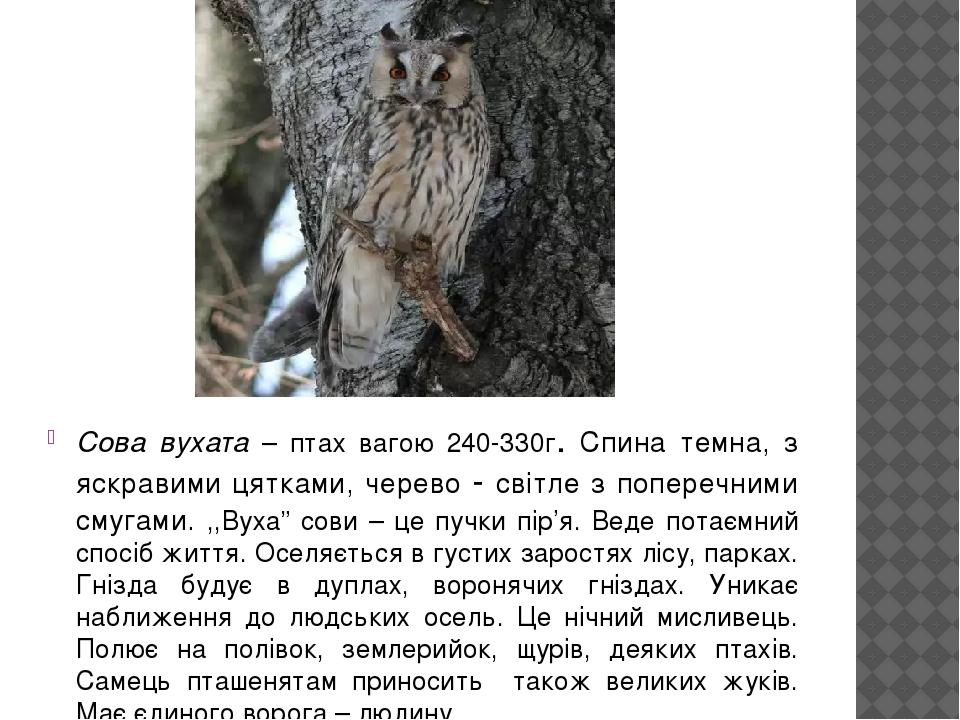 """Сова вухата – птах вагою 240-330г. Спина темна, з яскравими цятками, черево - світле з поперечними смугами. ,,Вуха"""" сови – це пучки пір'я. Веде пот..."""