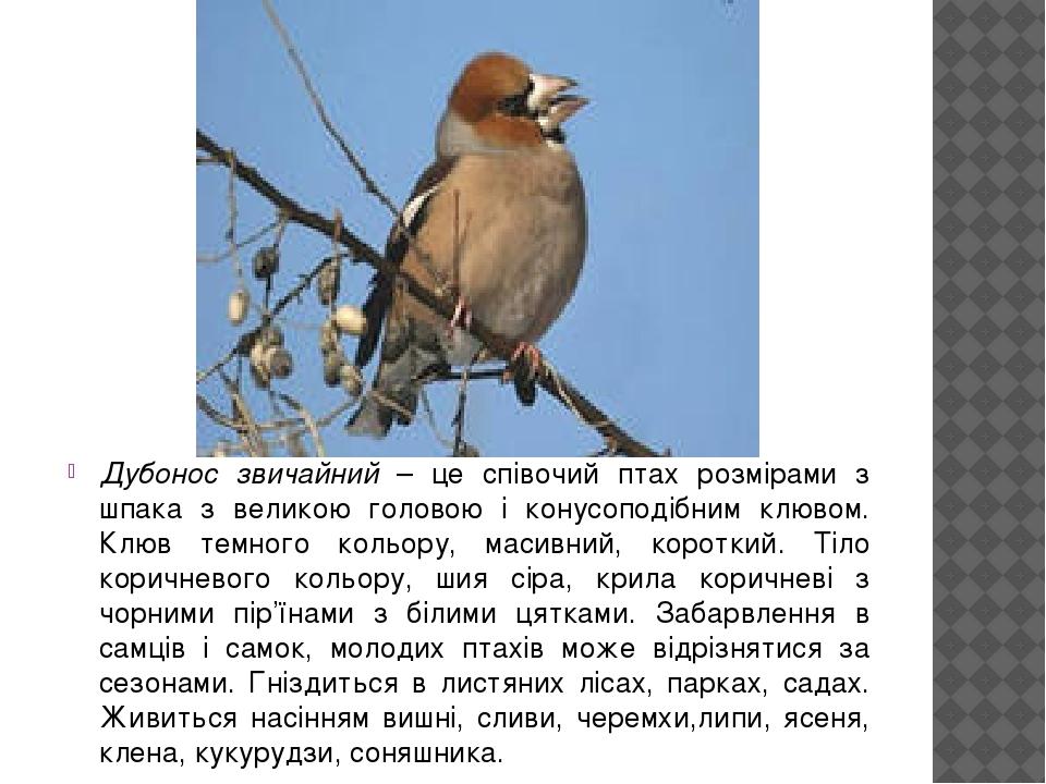 Дубонос звичайний – це співочий птах розмірами з шпака з великою головою і конусоподібним клювом. Клюв темного кольору, масивний, короткий. Тіло ко...