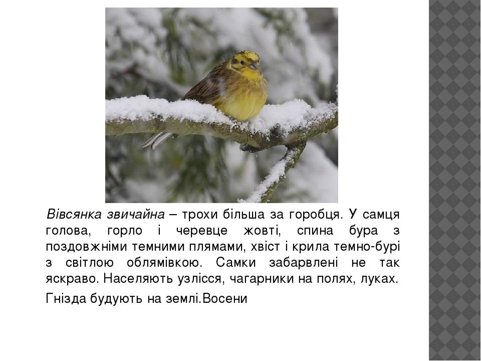 Вівсянка звичайна – трохи більша за горобця. У самця голова, горло і черевце жовті, спина бура з поздовжніми темними плямами, хвіст і крила темно-б...