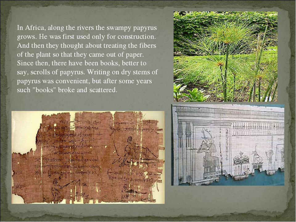 In Africa, along the rivers the swampy papyrus grows. He was first used only for construction. And then they thought about treating the fibers of t...