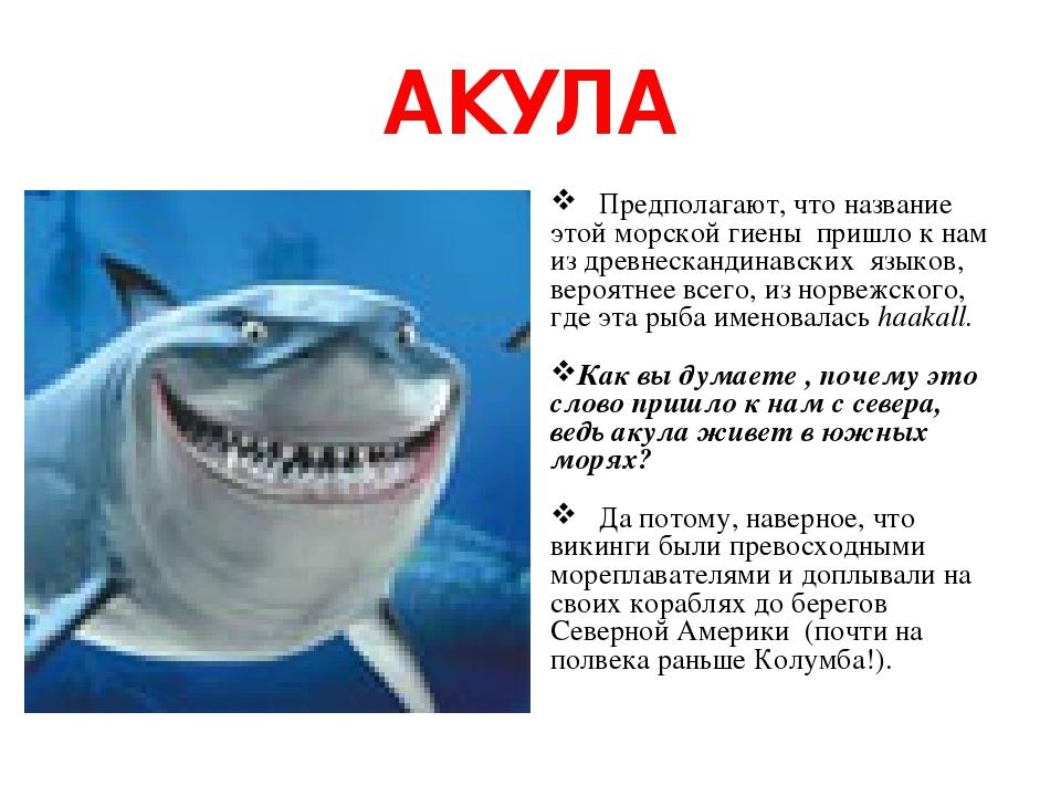 АКУЛА Предполагают, что название этой морской гиены пришло к нам из древнескандинавских языков, вероятнее всего, из норвежского, где эта рыба имено...