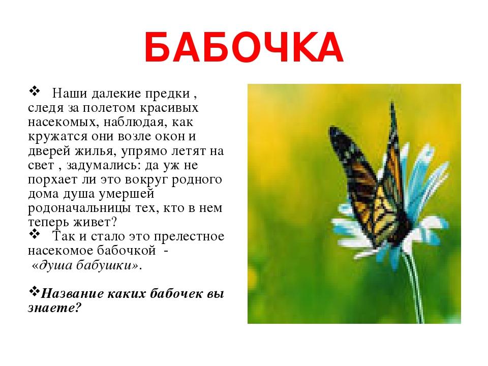 БАБОЧКА Наши далекие предки , следя за полетом красивых насекомых, наблюдая, как кружатся они возле окон и дверей жилья, упрямо летят на свет , зад...