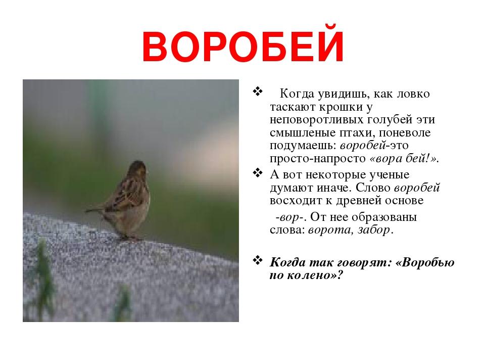 ВОРОБЕЙ Когда увидишь, как ловко таскают крошки у неповоротливых голубей эти смышленые птахи, поневоле подумаешь: воробей-это просто-напросто «вора...