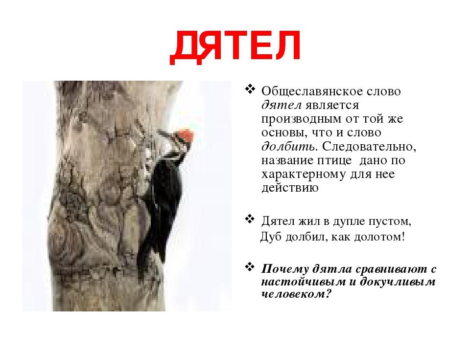 ДЯТЕЛ Общеславянское слово дятел является производным от той же основы, что и слово долбить. Следовательно, название птице дано по характерному для...