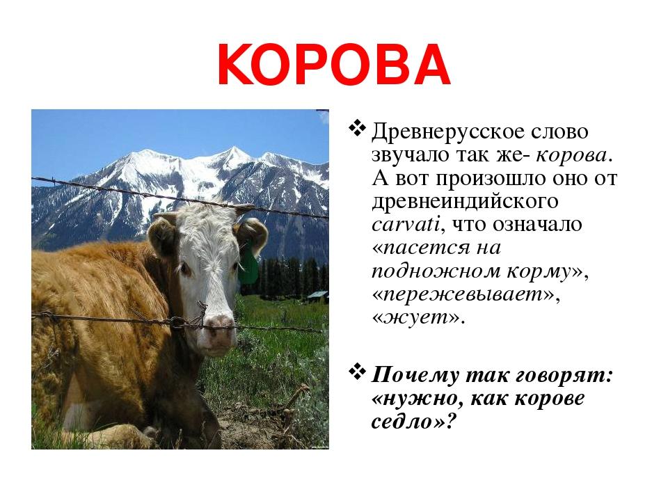 КОРОВА Древнерусское слово звучало так же- корова. А вот произошло оно от древнеиндийского carvati, что означало «пасется на подножном корму», «пер...
