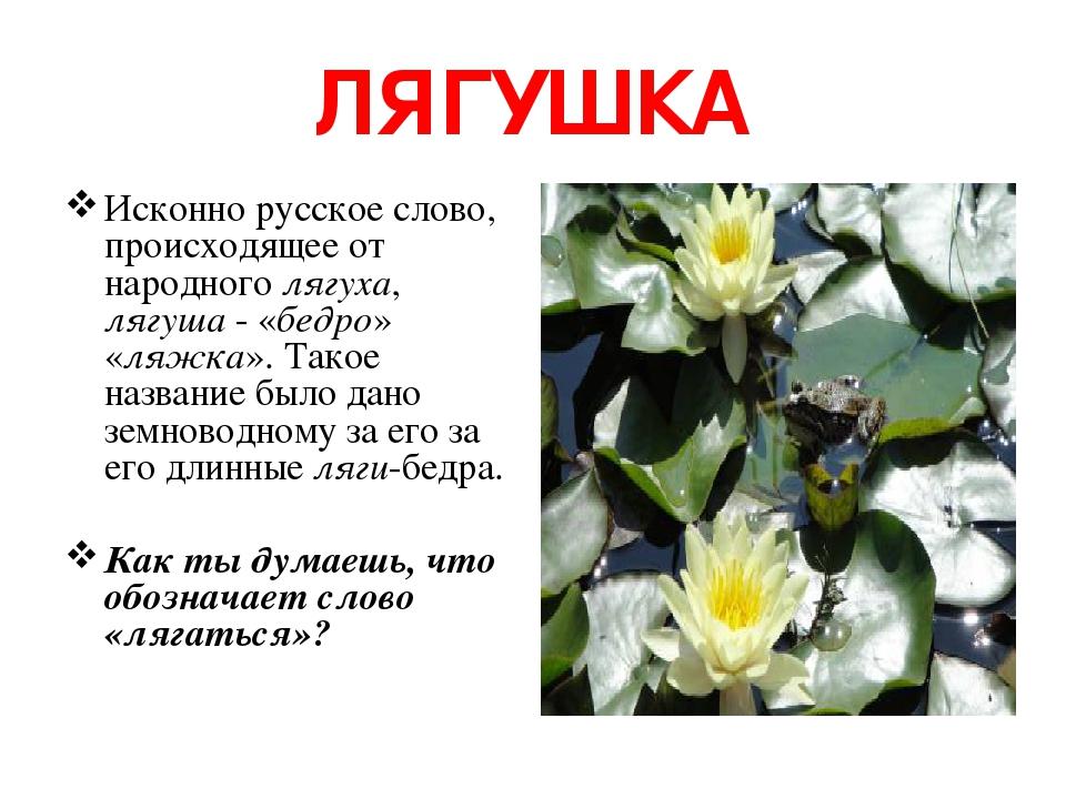ЛЯГУШКА Исконно русское слово, происходящее от народного лягуха, лягуша - «бедро» «ляжка». Такое название было дано земноводному за его за его длин...