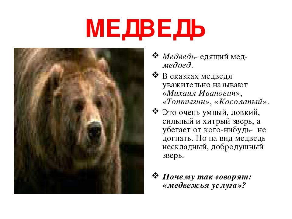 МЕДВЕДЬ Медведь- едящий мед-медоед. В сказках медведя уважительно называют «Михаил Иванович», «Топтыгин», «Косолапый». Это очень умный, ловкий, сил...