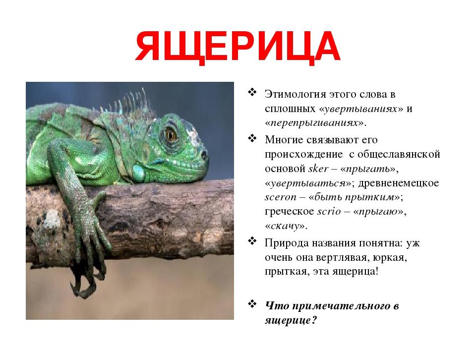 ЯЩЕРИЦА Этимология этого слова в сплошных «увертываниях» и «перепрыгиваниях». Многие связывают его происхождение с общеславянской основой sker – «п...