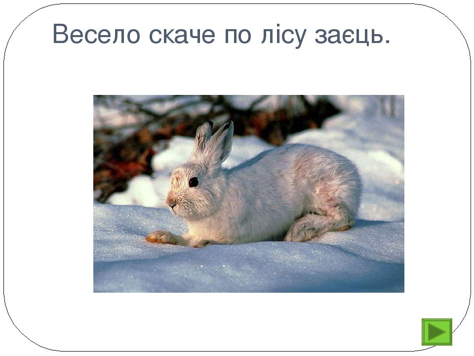 Весело скаче по лісу заєць.