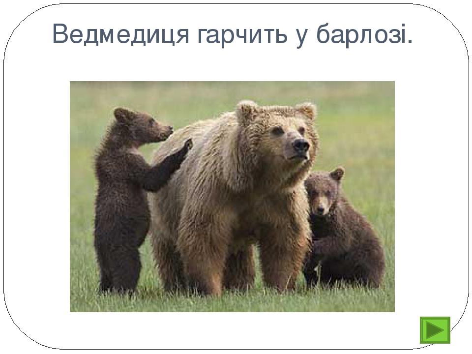 Ведмедиця гарчить у барлозі.