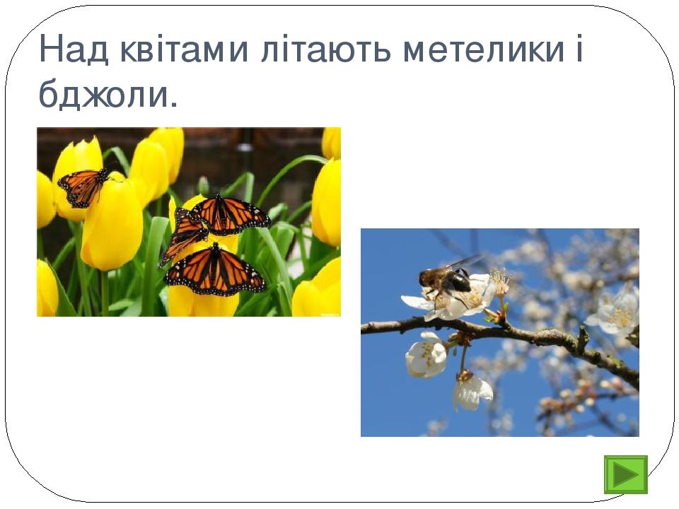 Над квітами літають метелики і бджоли.