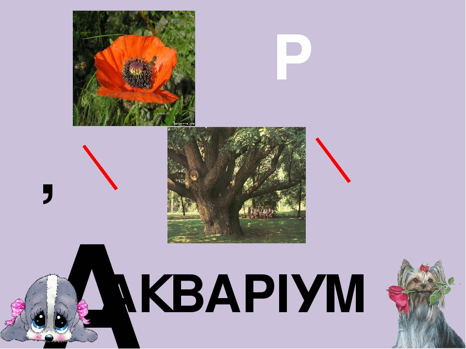 , А Д І Б М АКВАРІУМ Р