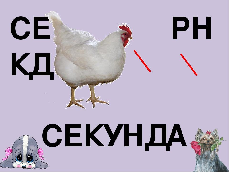 СЕ РН КД СЕКУНДА