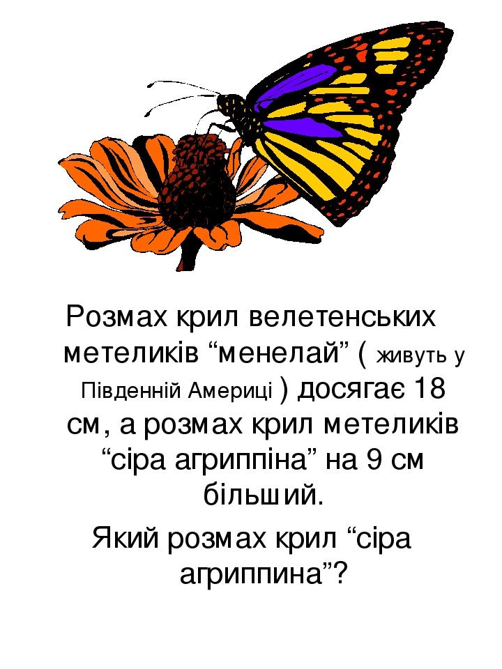 """Розмах крил велетенських метеликів """"менелай"""" ( живуть у Південній Америці ) досягає 18 см, а розмах крил метеликів """"сіра агриппіна"""" на 9 см більший..."""