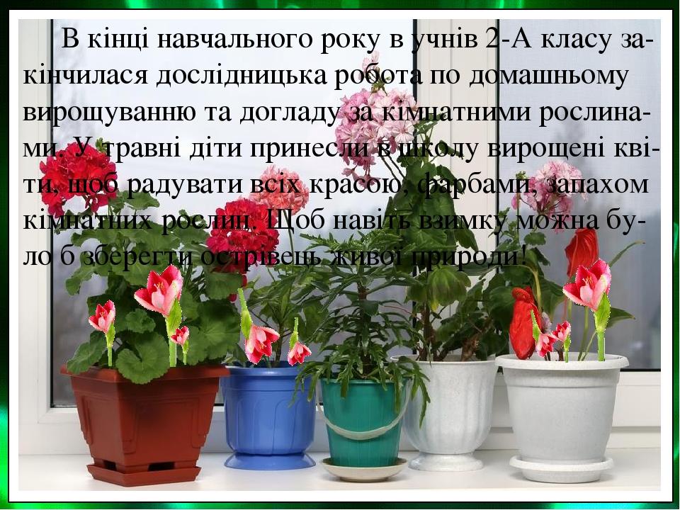 В кінці навчального року в учнів 2-А класу за-кінчилася дослідницька робота по домашньому вирощуванню та догладу за кімнатними рослина-ми. У травні...