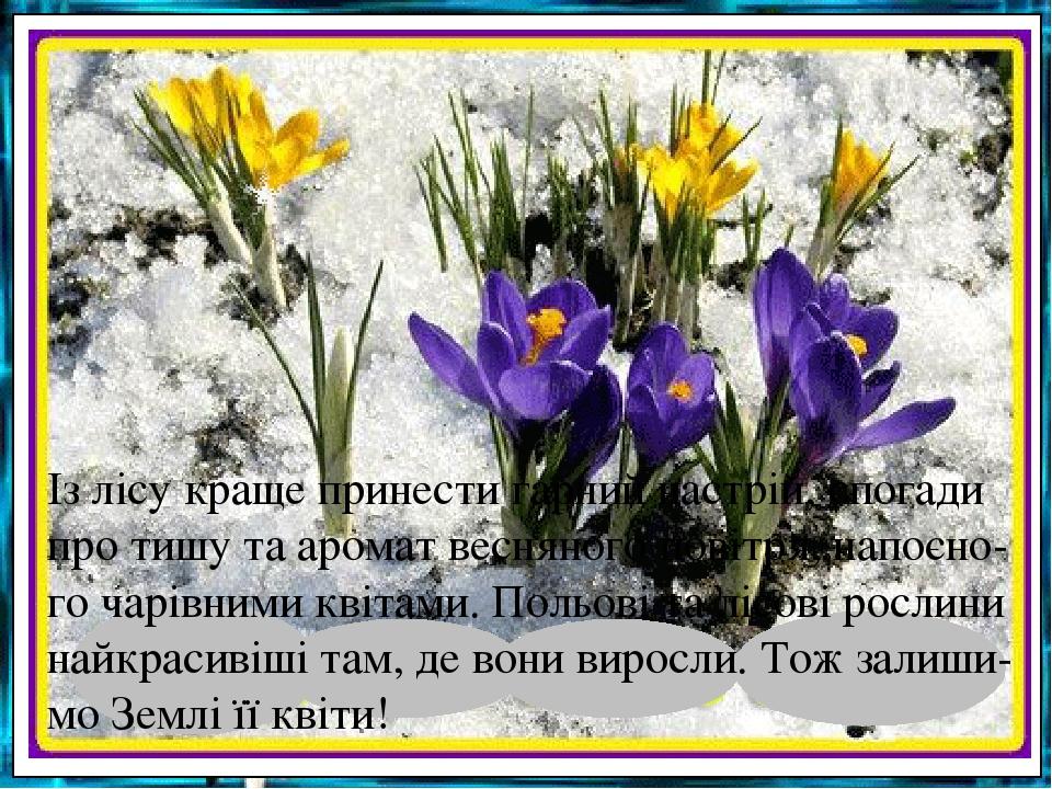 Із лісу краще принести гарний настрій, спогади про тишу та аромат весняного повітря, напоєно-го чарівними квітами. Польові та лісові рослини найкра...