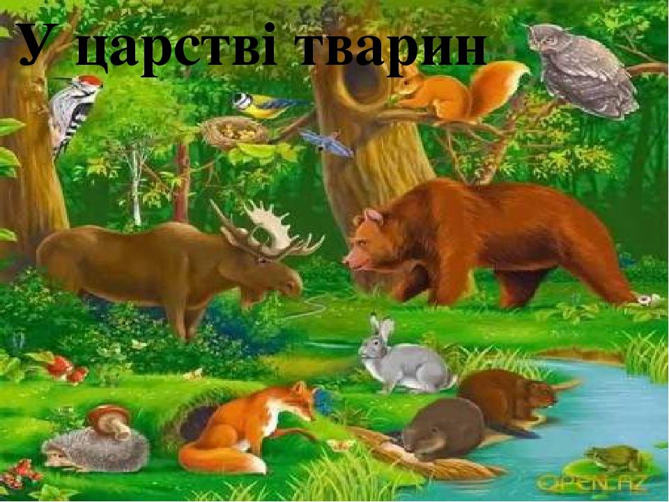 У царстві тварин