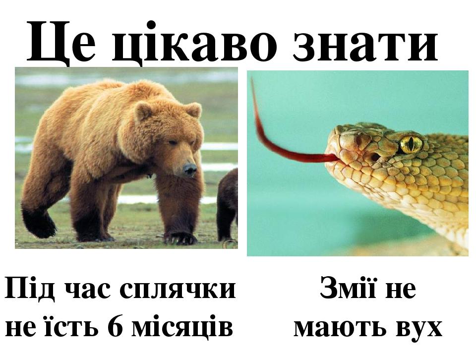 Це цікаво знати Під час сплячки не їсть 6 місяців Змії не мають вух