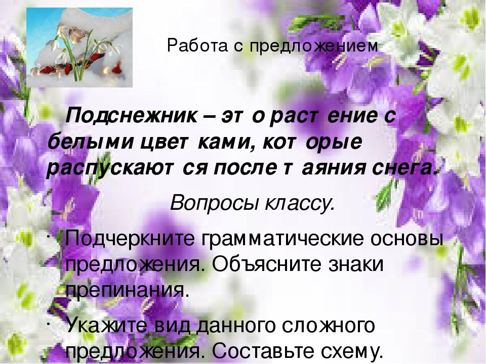 Работа с предложением Подснежник – это растение с белыми цветками, которые распускаются после таяния снега. Вопросы классу. Подчеркните грамматичес...