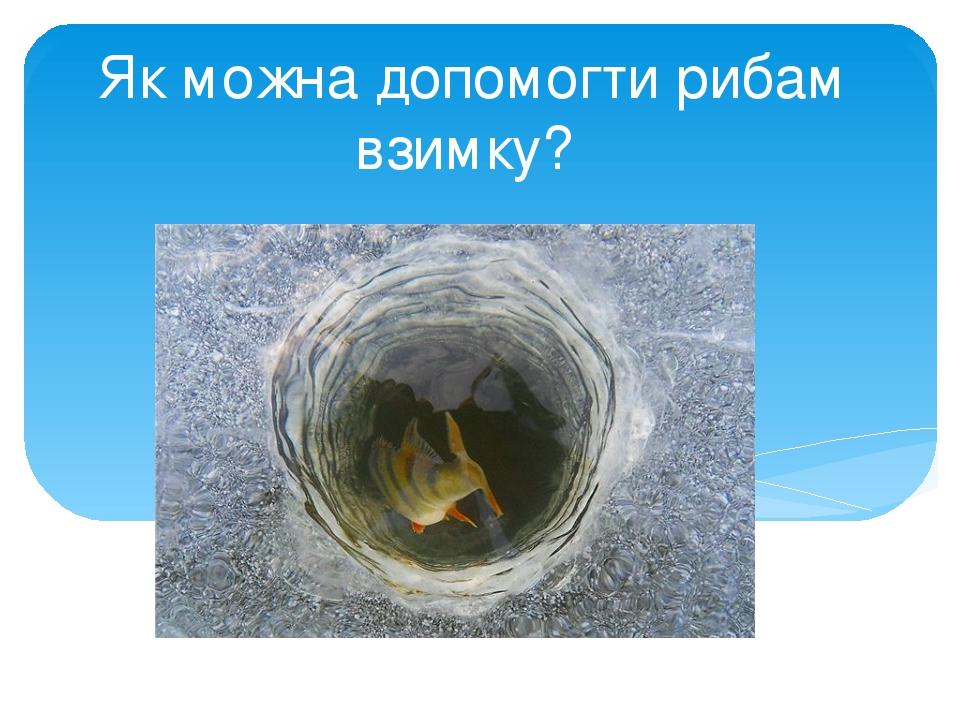 Як можна допомогти рибам взимку?