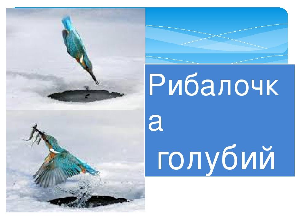 Рибалочка голубий