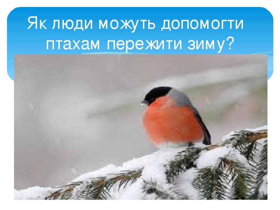 Як люди можуть допомогти птахам пережити зиму?