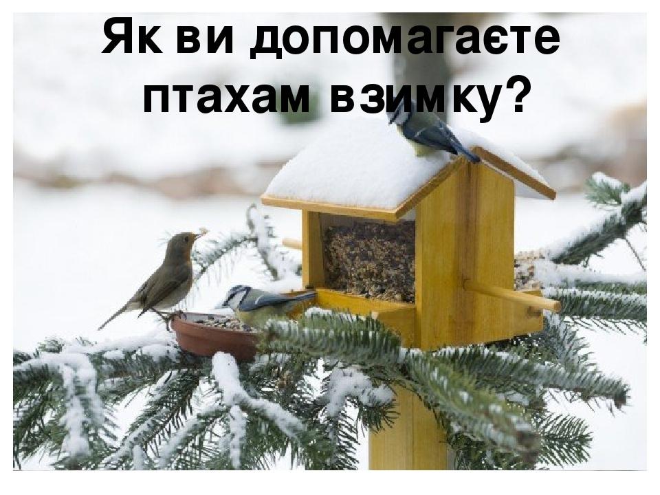 Як ви допомагаєте птахам взимку?